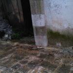 IMG08850-20140427-1151